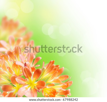 Floral Border - stock photo