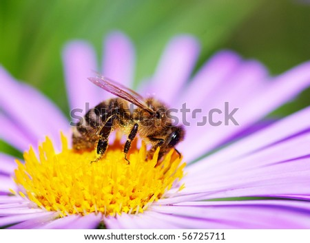 flower and bee - stock photo