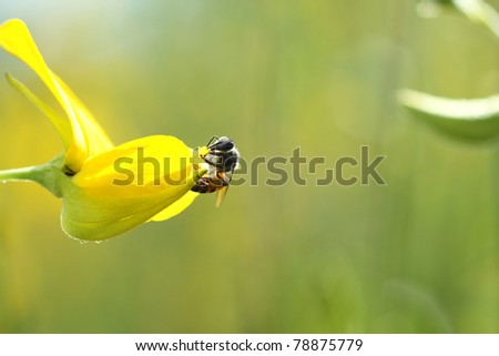 flower and the a little bee - stock photo