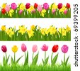 3 Flower Borders From Tulips And Narcissuses, Isolated On White Background - stock vector