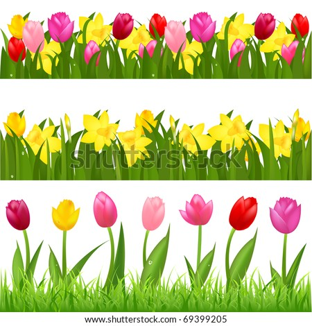 3 Flower Borders From Tulips And Narcissuses, Isolated On White Background - stock photo