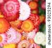 Flower Group. The colored flowers, spherical shape, overlap nicely. - stock photo