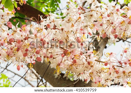 flower in garden in Thailand  - stock photo