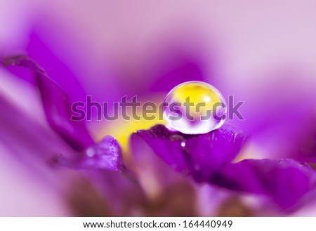 flower petals with water drops on it - stock photo