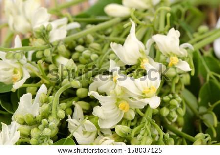 flowers and leaves of Moringa (Moringa oleifera Lam.). - stock photo