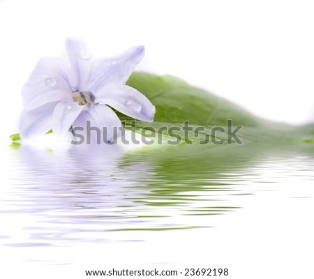 flowers and reflection over white - stock photo