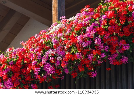 German Window Boxes Flowers in Window Boxes