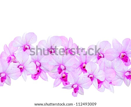 Flowers Orchids (  Dendrobium pink )  isolated on white background.