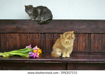 fluffy ginger cat sitting on a wooden bench close  - stock photo