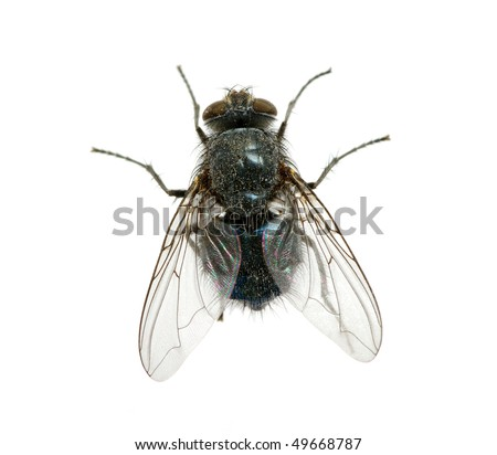 fly on a white - stock photo