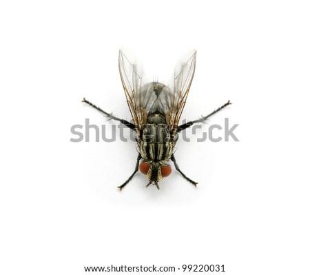 fly on a white background - stock photo
