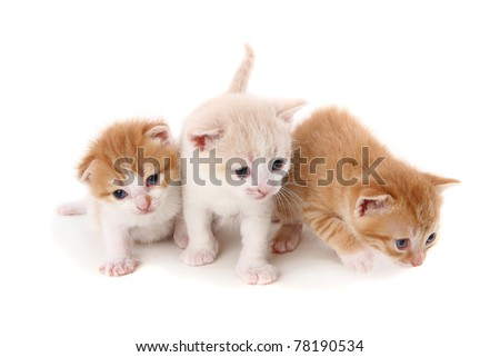 fold small purebred kittens. isolated - stock photo