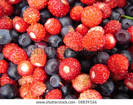 Forest berries - stock photo