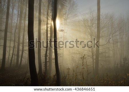 forest in autumn with sunbeams - stock photo