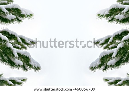 forest in the frost. Winter landscape. Snow covered trees. Dull gray day. - stock photo