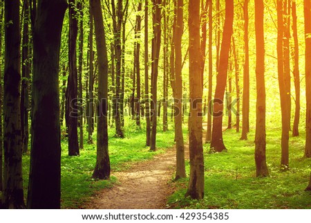 forest path in the morning - stock photo