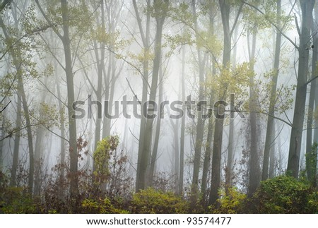 forest  with trees and fog - stock photo