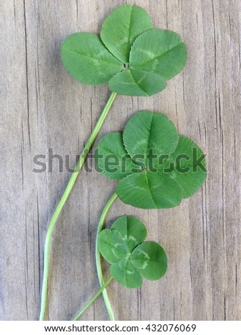 3 four leafed clovers on a wooden background for good luck