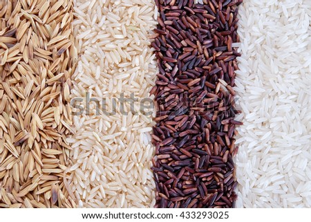 four rows of rice varieties. paddy rice,brown rice,rice berry and white jasmine rice. - stock photo