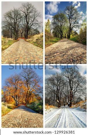 Four seasons collage: Spring, Summer, Autumn, Winter. - stock photo