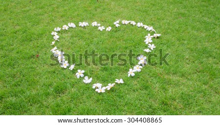 frangipani, Plumeria, tropical flower on grass field - stock photo