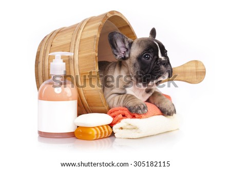 French bulldog puppy in wooden wash basin - stock photo