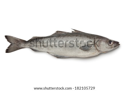 Fresh atlantic pollock fish on white background - stock photo