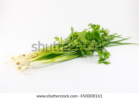 fresh cilantro and Spring onions on white background