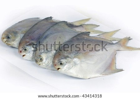 fresh fish isolated on white background