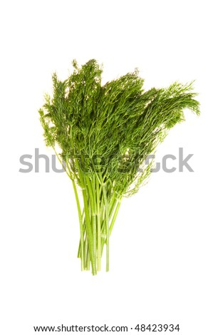 Fresh green dill isolated on white background - stock photo