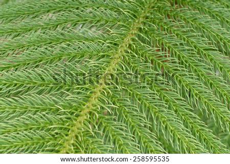 fresh green foliage for background - stock photo
