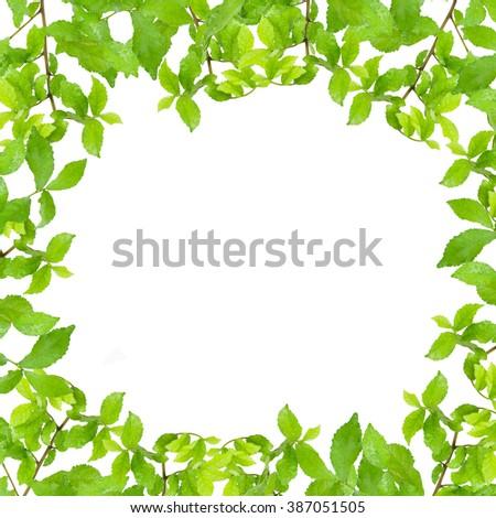 Fresh Green leaf frame with water drops  isolated on white background - stock photo
