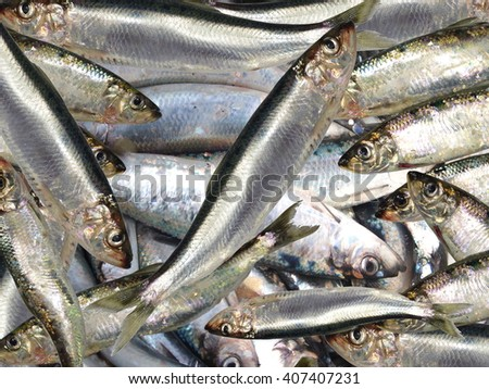 fresh herrings in box - stock photo
