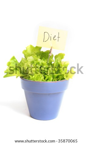 Fresh lettuce in a pot isolated on white - stock photo