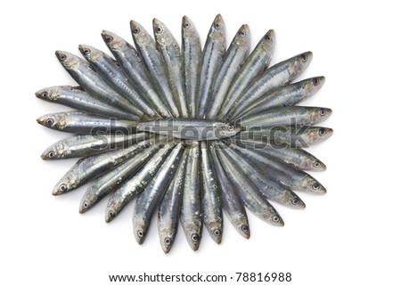 Fresh sardines in a nice pattern on white background