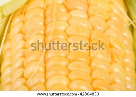 fresh yellow  corn ear,  close up  macro surface top view  background