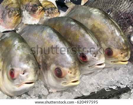 ?Frozen Braised Pomfret fish