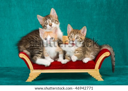 3 Funny kittens on miniature Victorian furniture on green background