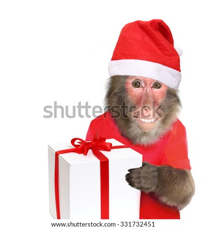 Funny monkey Santa Claus  with christmas  gift - stock photo