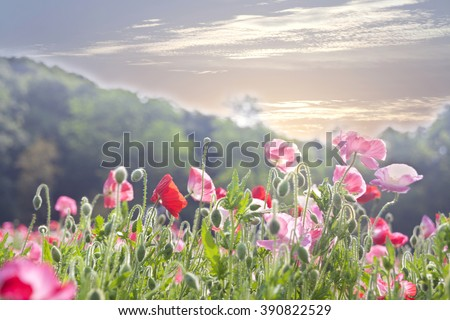 Garden flowers bloom in the morning - stock photo