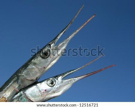 garfish against tbe blue sky - stock photo