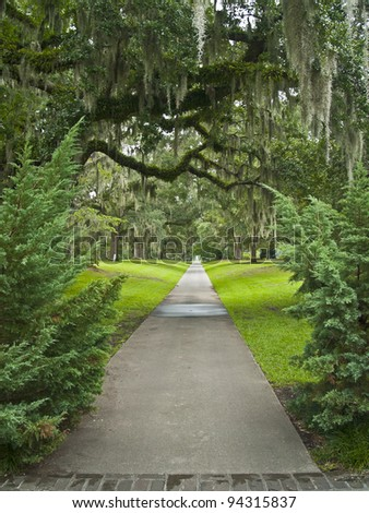 """Giant Oak Pathway"" A path surrounded by giant oaks with air ferns in Brookgreen Gardens near Myrtle Beach in South Carolina. - stock photo"