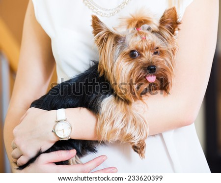 Girl caressing charming Yorkie terrier pet  indoor
