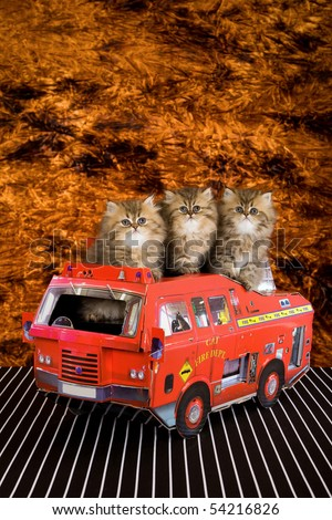 3 Golden Chinchilla Persian kittens in toy fire truck, with flame background - stock photo