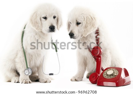 2 golden retriever puppy with a red phone and a stethoscope