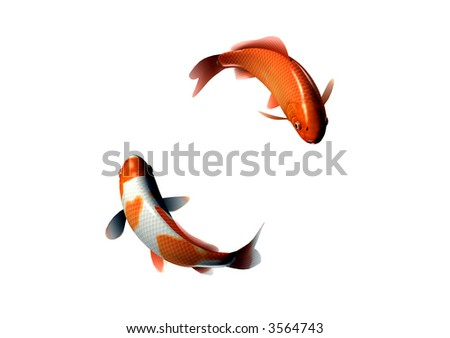 2 Goldfish Circling Each Other - stock photo