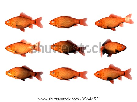 9 Goldfish with 1 goldfish swimming in other direction - stock photo