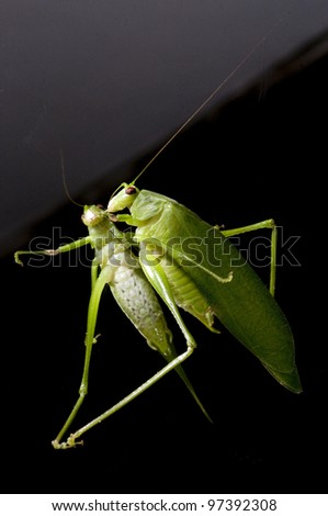 """Grasshopper on a mirror"""