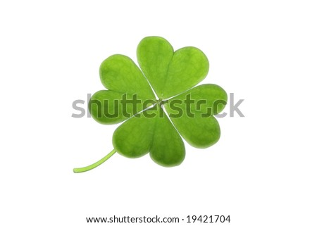 green clover isolated on white - stock photo