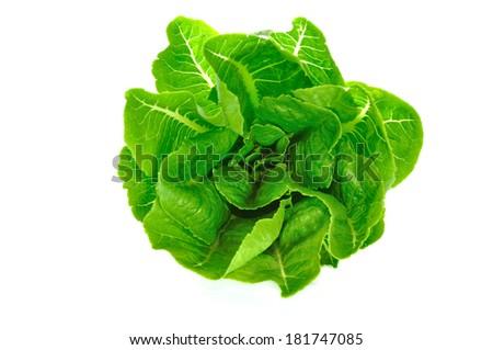 Green cos Salad - stock photo